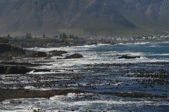 Meerespflanzenbetten in Hermanus Stockbilder
