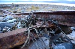 Meerespflanzenkelp fest zur alten verrosteten Bootslandungsrampe Stockfotografie