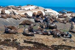 Meeressäugetierparks der Seedichtung und Reserven von Südafrika stockbilder