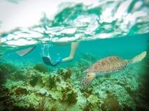 Meeresschildkröteüberraschung Stockfoto