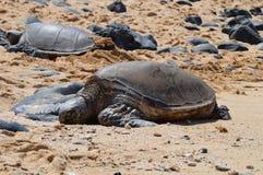 Meeresschildkröte Lizenzfreies Stockbild