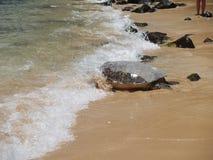 Meeresschildkröte, die heraus vorangeht lizenzfreies stockfoto