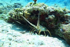 Meeresschildkröte in einem haarscharfen Wasser Stockfotos