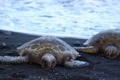 Meeresschildkröte-Hawaii-Schwarz-Sand stockfoto