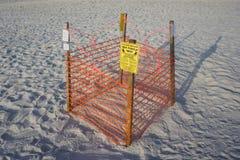Meeresschildkröte-Nest Lizenzfreie Stockfotos