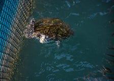 Meeresschildkröte, Reptilien lizenzfreie stockbilder