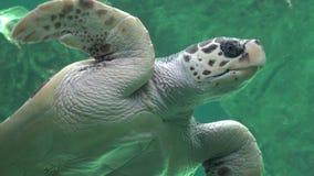 Meeresschildkröte-Reptilien und wild lebende Tiere lizenzfreies stockbild