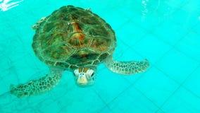 Meeresschildkrötekindertagesstätte lizenzfreies stockbild