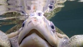 Meeresschildkrötekopfblick in camera stock video