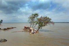 Meeresspiegel-Anstieg u. globale Erwärmung stockbild