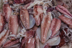 Meerestier-Markt â frischer Kalmar Stockbild