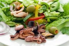 Meerestier-Salat lizenzfreie stockfotografie