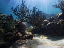 Meerestiere lebendig stockfotos