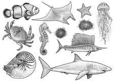 Meerestiersammlungsillustration, Zeichnung, Stich, Tinte, Linie Kunst, Vektor stockfotos