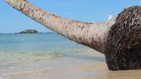 Meereswellen auf dem Strand mit Palme stock video footage