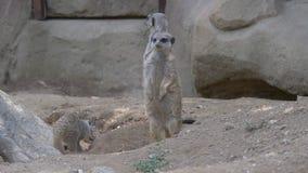 Meerkat常设开掘 影视素材