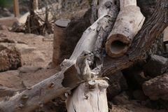 Meerkat海岛猫鼬类suricatta小非洲哺乳动物 免版税库存照片
