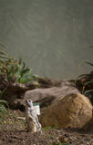 meerkat στεμένος Στοκ εικόνα με δικαίωμα ελεύθερης χρήσης