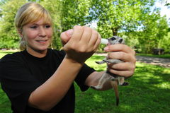 meerkat χαμογελώντας Στοκ Εικόνες