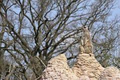 meerkat предохранителя обязанности стоковое изображение rf