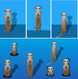 Meerkat 向量例证