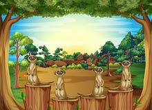 Meerkat illustration libre de droits