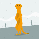 Meerkat looking for space Royalty Free Stock Images