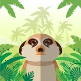 Meerkat na dżungli tle Zdjęcie Royalty Free