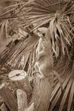 Meerkat pozycja na drzewnym fiszorku na tle palmowy liść wewnątrz Fotografia Royalty Free