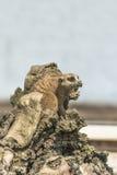 Meerkat. Sitting on wooden stump Royalty Free Stock Photography