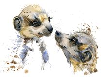 Meerkat watercolor illustration. fashion Tee shirt design. Hand-drawn meerkat watercolor illustration. fashion Tee shirt design vector illustration