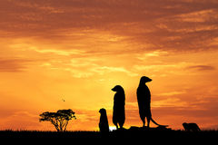 Meerkats in African landscape at sunset. Illustration of Meerkats in African landscape at sunset Royalty Free Stock Image