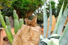 Meerkats in dierentuin stock foto's