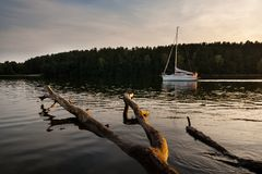 Meerlandschap met dode boom royalty-vrije stock afbeelding