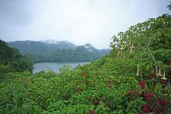 Meermening in de heuvels van Sibulan in de Filippijnen Royalty-vrije Stock Foto