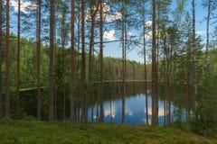 Meermening door bomen van diep naaldbos royalty-vrije stock foto's