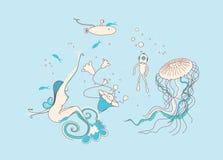 Meermin die in het water zwemt Royalty-vrije Stock Foto