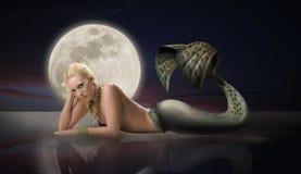 Meermin met Volle maan Stock Afbeelding