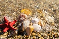 Meeroberteile und Starfish auf sonnigem Strand Stockfotografie