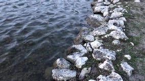 Meeroppervlakte en rotsen stock footage
