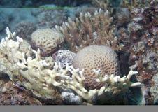 Meerunterwasserkoralle   Lizenzfreies Stockfoto