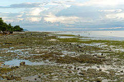 Meerwasser tritt am Nachmittag zurück Lizenzfreies Stockbild