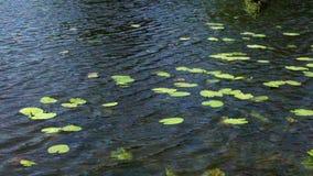 Meerwaterspiegel met groene installaties stock video