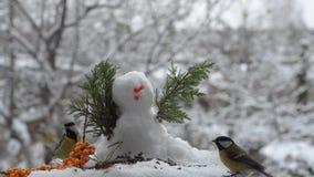 Mees en Mus het pikken zaden dichtbij de sneeuwman stock video