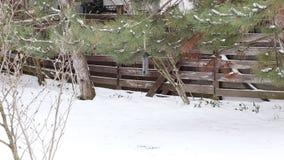 Mees het plukken zaden in de ruwe winter stock videobeelden