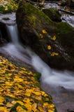 Meeslepend water en gouden bladeren Royalty-vrije Stock Foto