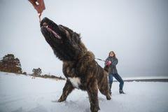 Meester en haar het braaf Kaukasische Herdershond spelen in de winterbos royalty-vrije stock foto