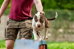 Meester en zijn braaf hond op een hond opleidingscentrum stock afbeelding