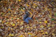 Meester van vermomming in het de herfstbos stock afbeelding