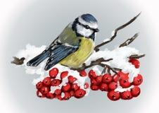 Meeszitting op snowcovered tak van lijsterbes De aard van de winter Royalty-vrije Stock Afbeeldingen